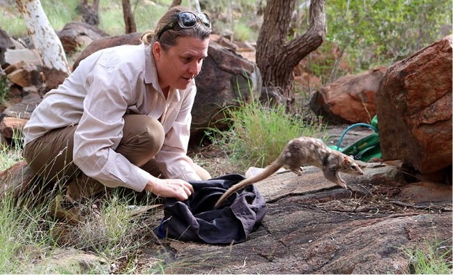 Judy Dunlop, Quoll Patrol Monitoring Endangered Species - Wildlife Research Grants - FNPW